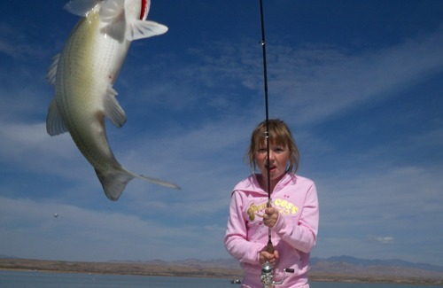 Elephant Butte White Bass